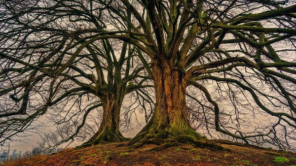 usuwanie drzew warszawa
